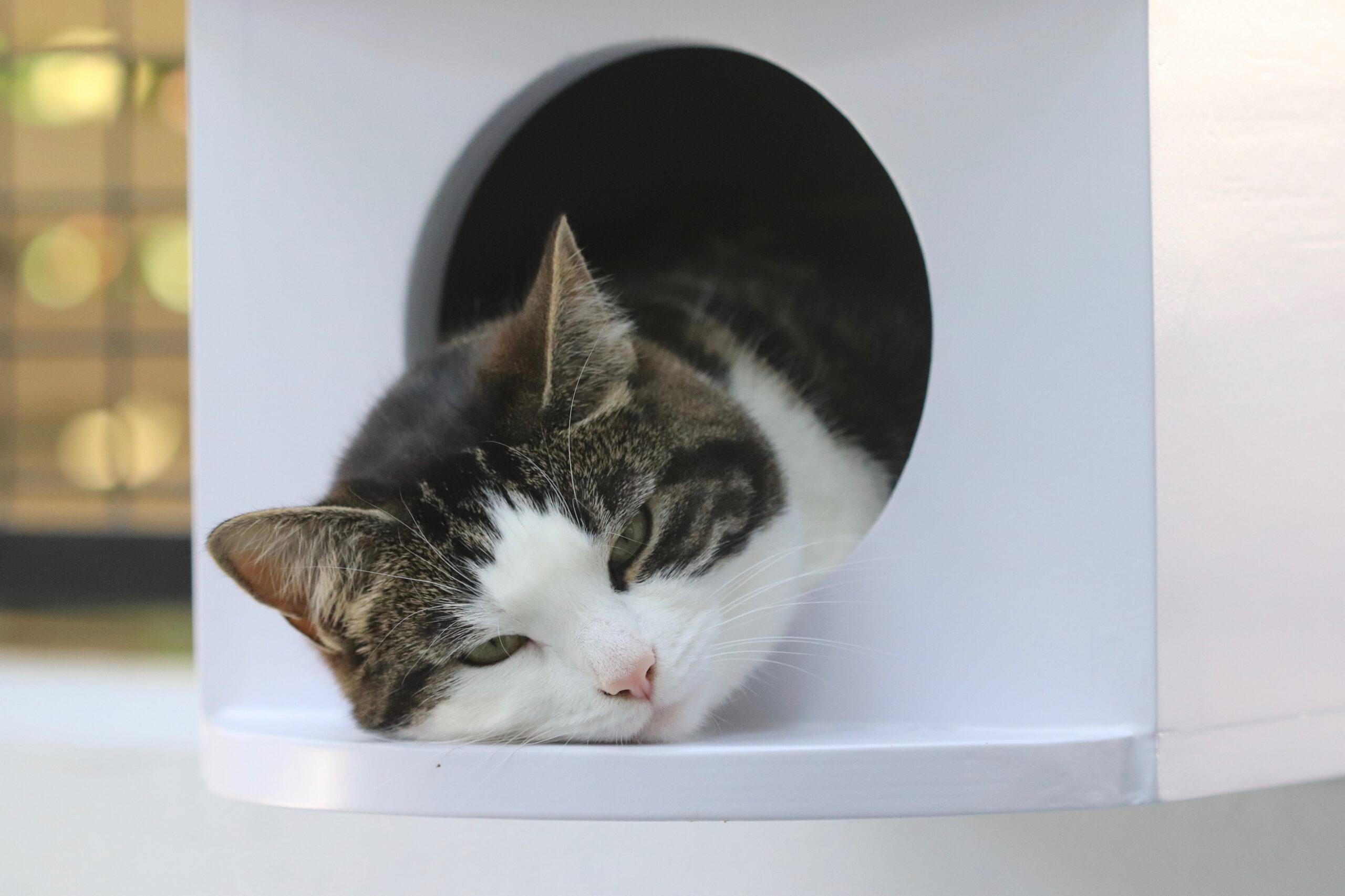 Kattenhotel